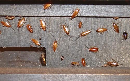 Любимые места тараканов.