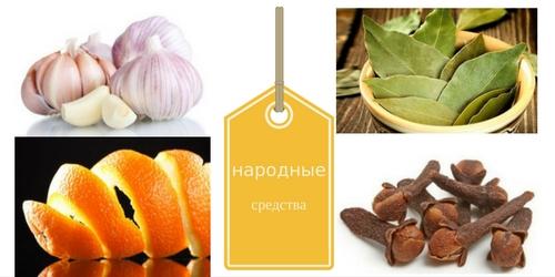 Какие средства от кухни помогают от пищевой моли.