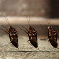 Насколько эффективны электронные приборы от тараканов.