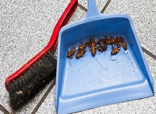 Отрава от тараканов с борной кислотой.