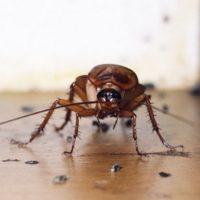 Основы правильной травли тараканов.