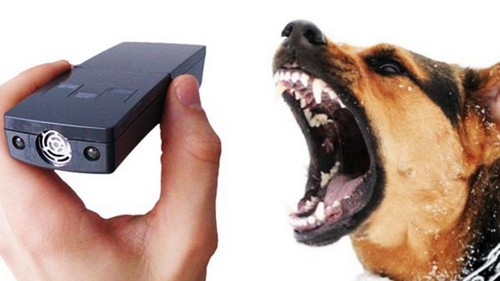 Реакция собаки на ультразвук.