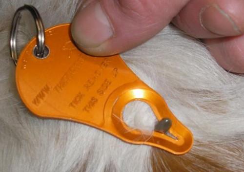 Симптомы укуса клеща у собаки при разных заболеваниях