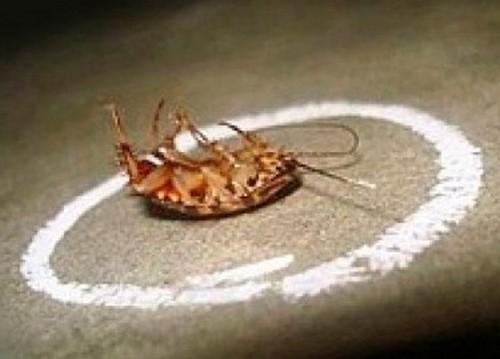 Домашние тараканы: как от них избавиться быстро