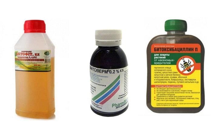 Биологические препараты от паутинного клеща