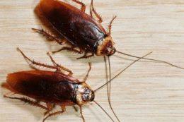 Что може напугать тараканов в квартире.