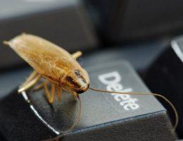 Ловушки для тараканов и их эффективность.
