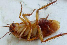 Самые эффективные порошки и гели от тараканов.